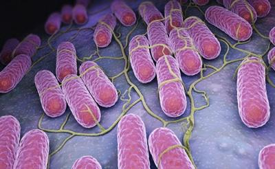 Il microbiota intestinale nella medicina dei sistemi